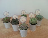 "Budget-Friendly, 170 Succulent Plant Favors, Wedding Favors, Rosettes in 2""  Silver Pails, Optional Custom Favor Tags Available"