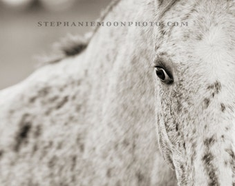 Black and White Horse Photography, Appaloosa Horse Print, Horse Detail, Horse's eye