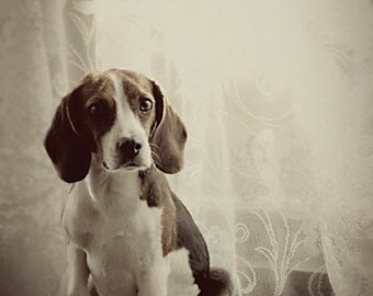 Fine Art Dog Photography, black and white dog photography