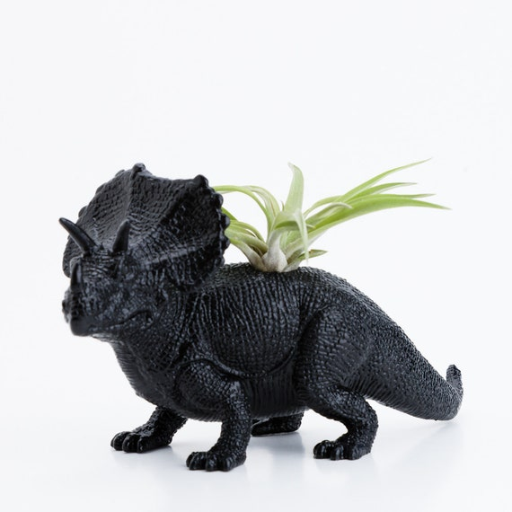 Black Triceratops Dinosaur Planter With Air Plant By Modern333