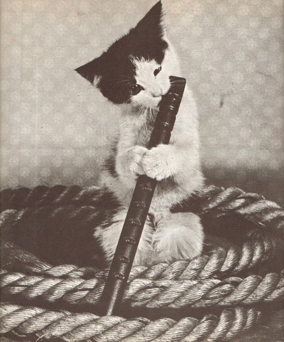 The Flute Playing Cat. Vintage Cat Art Print. Shabby Chic, Music, Kitten, Black and White Tabby. (No. 496)