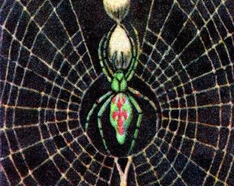 1932 Vintage Spanish Sheet of Illustrations on Spiders / Sheet 21