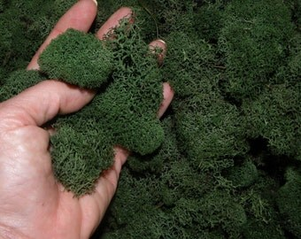 Reindeer moss Bulk 1 pound-Deer foot moss-Fluffy Lichens-Preserved Lichens-Spring Green Colors in assorted sized spongy soft...