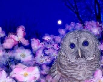 Night Owl, 8 x 10 Fine Art Print