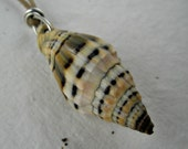 Cone Shaped Sea Shell Necklace on Tan Waxed Cotton Cording Sterling Silver Handmade Jewelry