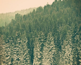 Wintry - 5 x 5 Fine Art Photograph - Winter Snow Christmas Holiday green home decor print