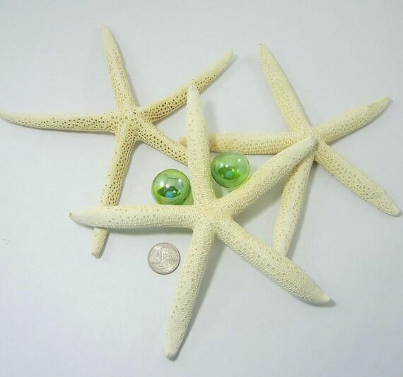 Beach Decor XL White Starfish - Nautical Decor 8-10in White Starfish, 1pc