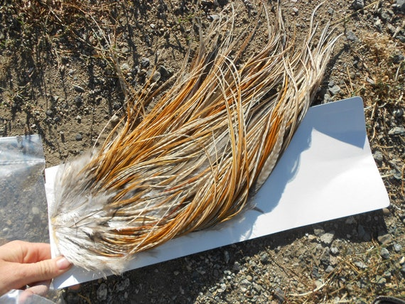 """12 Long Grizzly Tans Rooster Hackle Feathers (7-10"""" plus) For Hair Extensions and crafts Lot ROSWELL"""