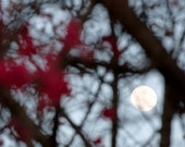 Full Moon Photo titled Through the Peachtrees -- Limited Editions in Various Sizes