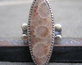 Fossil Coral Ring.  Agatized Coral and Sterling Silver Ring.  US Size 5.5