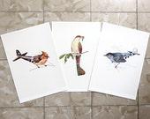 Aerofauna II Series - Set of 3 Prints