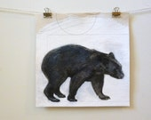 black bear, original contemporary nature drawing