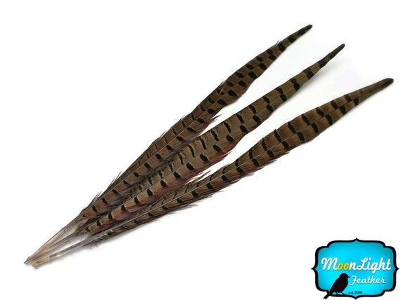 "Tail feathers, 10 Pieces - 14-16"" NATURAL LONG Ringneck Pheasant Tail Feathers : 121"