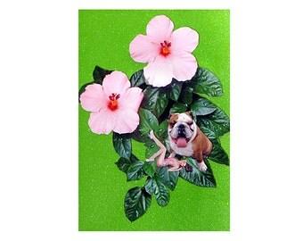 bulldog,pet portrait, pet collage,green, home decor, shabby chic, woman dog,pink flowers,animal art,tagt team