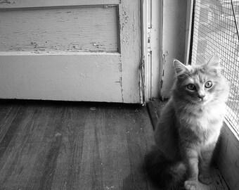 Gray Scale Cat Photo