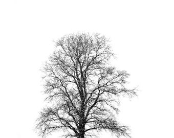 Winter Tree, Black and White Nature Photography, Landscape, 11X14 Mat, Ready to Frame, Wall Art, Snow
