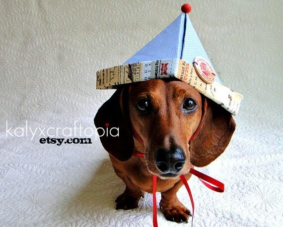 Dog Hat  light blue polka dot birthday