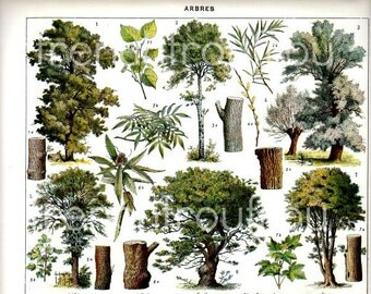 antique french illustration learning board trees print digital download