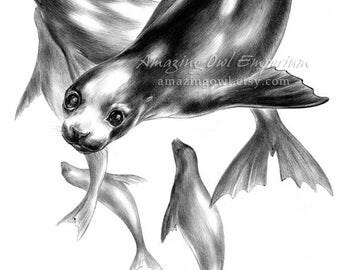 "Flight of Seals - 8x10"" Giclee Art Print"