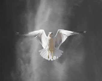 Ring-billed Gull, Seagull, Bird Photography,  Limited Edition Photography Bird Art Print, Fine Art Photography, Flight Lesson B