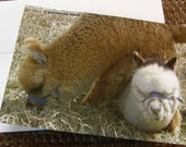 Friends Alpaca Note-card