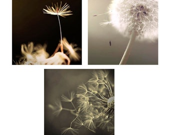 SALE, Dandelion Prints, Black, Gray, White, Flower Photos, Set of 3 Prints, White, Neutral, Dandelion Wall Art, Save 50%