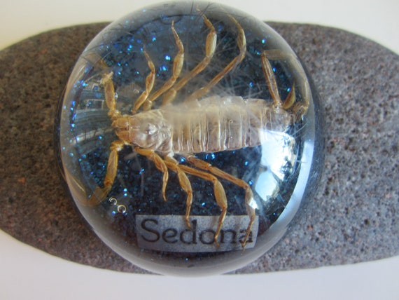 Vintage  Paperweight with Real Scorpion Souvenir from Sedona Arizona