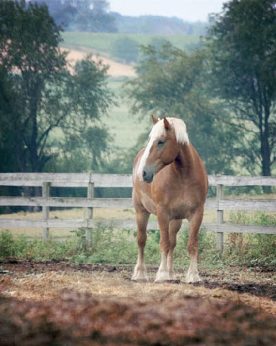 Horse Photography pasture western country rustic farm barn palomino
