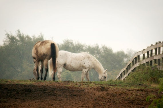 Horse Photography pasture western country rustic farm barn white brown green grazing 8x12