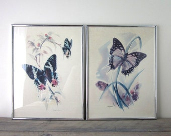 Framed Butterfly Prints Set of Two