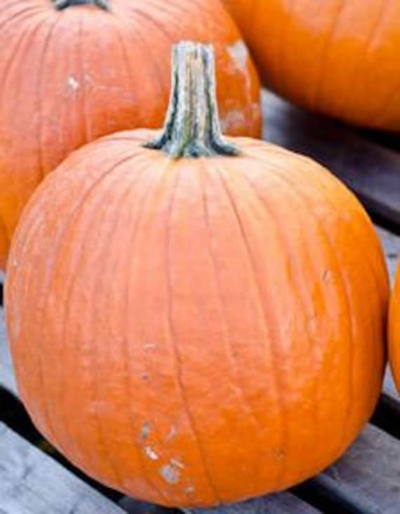 Pumpkin, Triple Treat Pumpkin Seeds - Awesome for Seeds, Pie & Carving