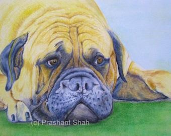 "English Bulldog - Original 8"" x10"" Colored Pencil Painting - pet dog"