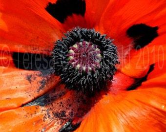 Flower Photography, Bright Orange Poppy Photo, Fine Art Floral Print, Red Black Botanical Close up Wall Art Garden Gift Decor, 8 x 10, 16x20