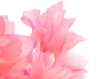 Tranquil Blossoms - 5 x 5 Fine Art Digital Flower Photo Print - Pink and Peach Fluffy Spring Blossoms - Watercolour like image - home decor