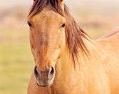 Pretty Buckskin Horse Photograph, Cream Colored Equine Photography, Horse