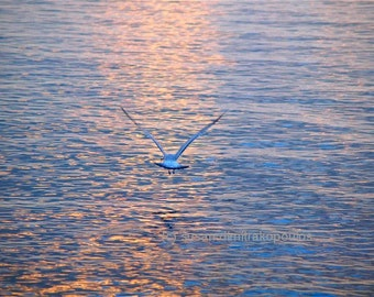 Scenery, bird photograph, Returning, Jonathan Livingston Seagull, seagull in flight, home office cottage decor, nature photograph, spiritual