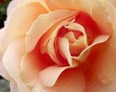 Peach Rose Photography Macro Modern Home Decor BOGO 10x8 Print Peach Fondant...
