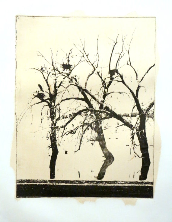 Redhill Egrets-etching