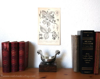 Elmtree Botanical Antique Original 1896 Lithograph from Vintage Dictionary OOAK One of a kind