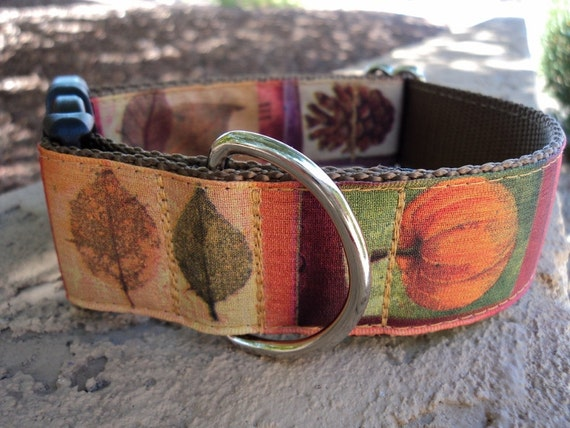 "Large Dog Collar Autumn 1.5"" width Quick Release buckle adjustable - martingale style is cost upgrade"