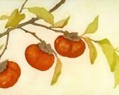 Three Persimmons, Original Fine Art Etching of fall persimmons
