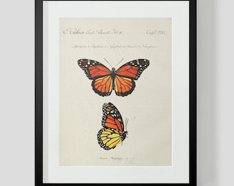 Butterfly Plate 3