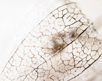 Seed Cages 5 - Fine Art Photography - Wall Décor - Nature Photography