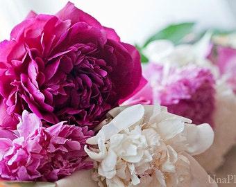 Pink Peonies  - Fine Art Photograph