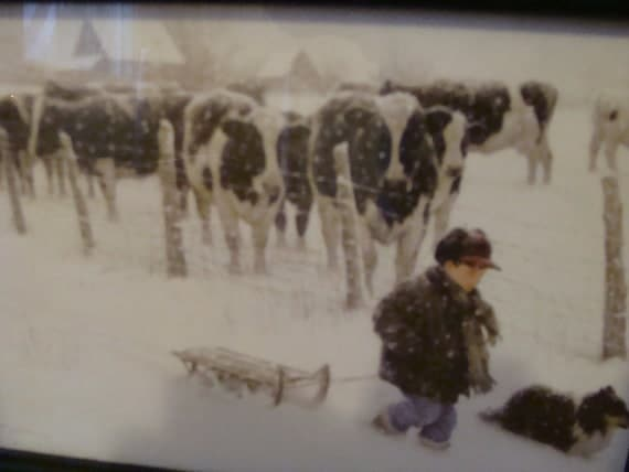 Vintage Boy With Cows Framed Print By Thenorthcottage On Etsy