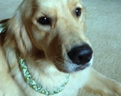 HAPPYDOG BLING Pearl and Ribbon Dog Necklace