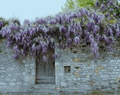 "Scenic Photography  Wisteria at Viviers France 5"" x 7"" matted Print"