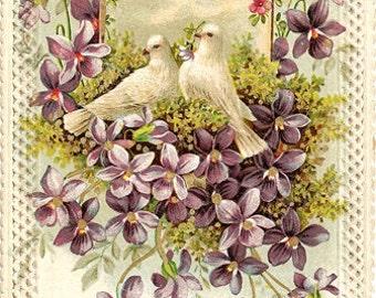 doves - digital scan vintage antique postcard printable download violets card label tag wall art decor large image transfer fabric transfer