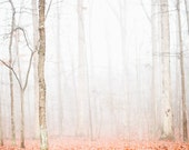 Forest of fog, blanket of orange -  (8 x 10)