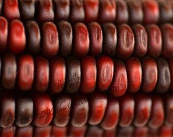 Red Maize 8x10 Fine Art Print - Maroon, Corn, Macro, Abstract, Pattern